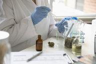 Quality control specialist testing marijuana oil - HEROF35550