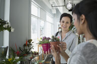 Florist showing customer cactus flower pot flower shop - HEROF35742