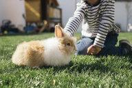 Little boy petting a bunny in garden - MOMF00685