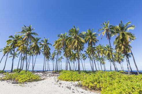USA, Hawaii, Big Island, Pu'uhonua o Honaunau National Park, Palms at the beach - FOF10625