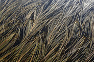 Grass in water of small pond - RUEF02161