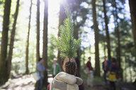 Portrait tree planting volunteer holding tree sapling in woods - HEROF36174
