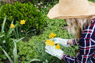 Young woman with straw hat examines daffodils with her gloves - HMEF00291