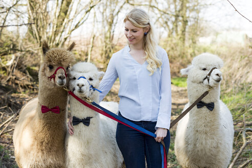 Smiling woman with three alpacas wearing bridles and bow ties - FLLF00114