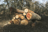 Stack of tree logs in forest - DWF00429