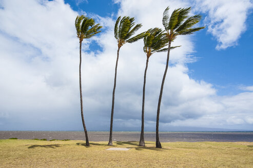 Palm trees, Kakahaia beach park, island of Molokai, Hawaii - RUNF01863