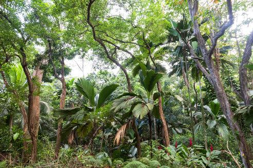 Seychelles, rain forest - NDF00885