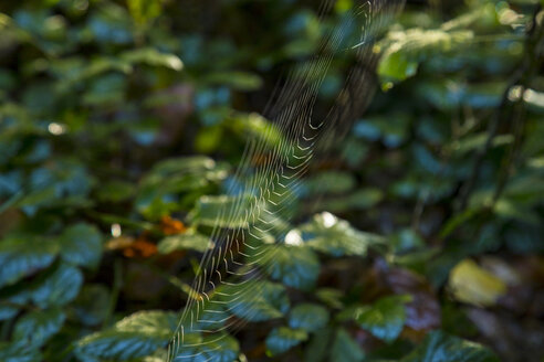 Spider web in autumn - HSIF00539