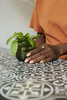 The beauty of the details. Botanica, Moçambique, Maputo. - VEGF00018