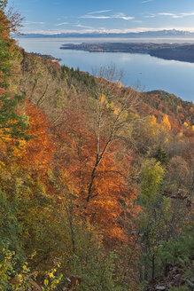 Germany, Baden-Wuerrttemberg, Lake Constance, Sipplingen, autumn forest, Alps and lake - SH02172