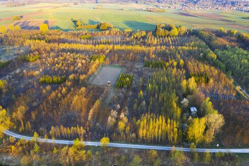 Germany, Augsburg, Inningen, reforestation - SIEF08611
