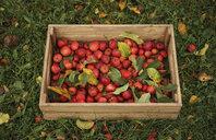 Apples in wooden crate - BLEF00490