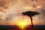 Silhouette tree at sunset - BLEF00919