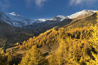 Autumn trees near snow covered mountains - BLEF01126