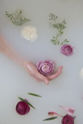 Hand of Caucasian woman in milk bath with flowers - BLEF01787