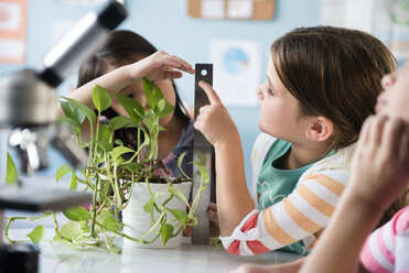 Girls measuring growth of plant in classroom - BLEF02383