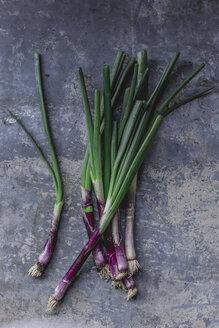 Violette Frühlingszwiebeln, frisch vom Markt, draufsicht, studio - STBF00328