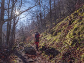 Spain, Asturia, Cantabrian Mountains, senior man on a hiking trip through the woods - LAF02304