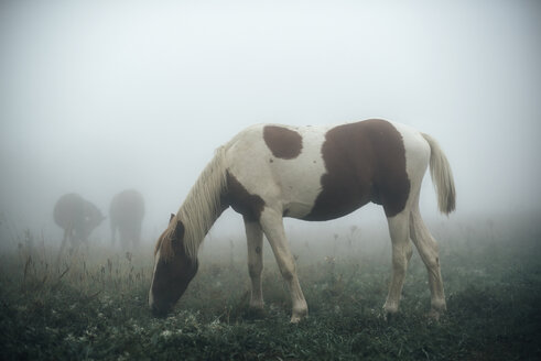 Horse grazing in foggy pasture - BLEF03167