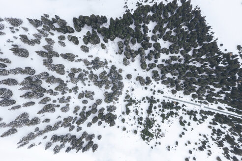 Austria, Tyrol, Galtuer, view to snowy trees, aerial view - MMAF00940