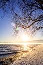 Switzerland, Arbon, Lake Constance, tree at sunset in winter - PUF01450