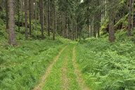 Germany, Saxony, Elbe Sandstone Mountains, dirt road in a forest - RUEF02198