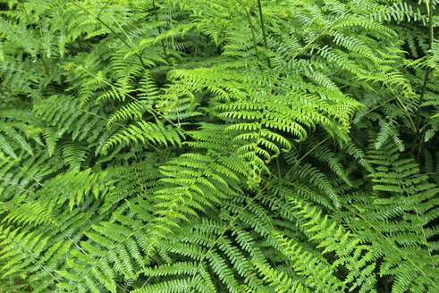 Close-up of fern - RUEF02201