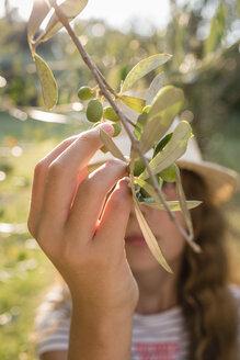 Green olives on tree picked by a girl, Tuscany, Italy - OJF00347