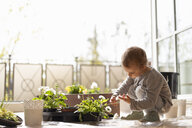 Cutle little girl examining flower on balcony - DIGF07047