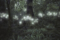 Glowing spheres hovering in forest - BLEF03713