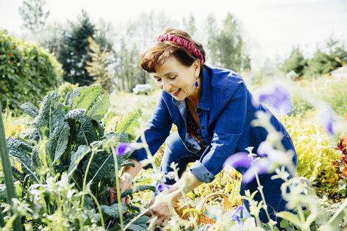 Caucasian woman picking vegetables in garden - BLEF03896