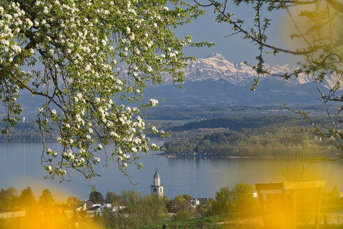 Deutschland, Baden-Württemberg, Bodensee, Überlinger See, Überlingen, Münsterturm und Alpen im Frühling - SH02184