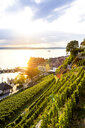 Meersburg in backlight, Lake Constance, Germany - PUF01499