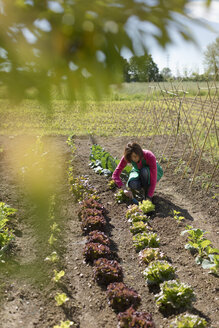 Woman working on her Vegetable Garden. Italy. - MAUF02463