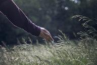 Man's hand touching grasses - MAMF00692