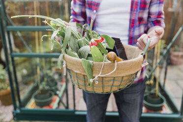 Close-up of man holding basket with flowers before greenhouse in garden - NMS00321