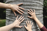 Four hands touching a tree trunk - EYAF00252
