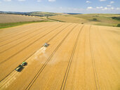 Aerial landscape view of combine harvester and tractor trailer in sunny golden barley field - JUIF01153