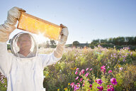 Beekeeper, holding beehive frame of honey up to the sun, in field full of flowers - JUIF01202