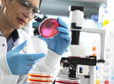 Scientist examining cultures growing in petri dishes in the laboratory. - ABRF00399