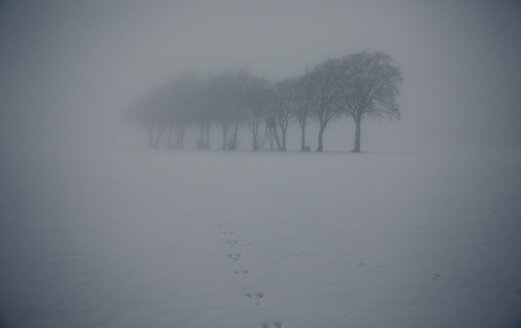 Hazy winter landscape with row of trees and raised hide - ANHF00129
