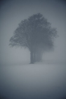 Hazy winter landscape with row of trees and raised hide - ANHF00132