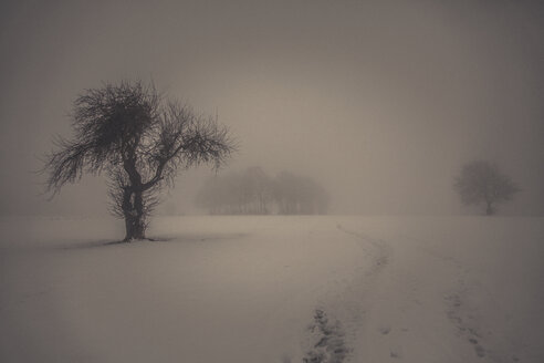 Winter landscape with bald trees - ANHF00138