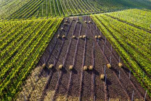 Aerial view over vineyards at Kappelberg in spring, Fellbach, Germany - STSF02018