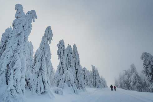 Two hikers at winter landscape, Arbermandel, Ore Mountains, Germany - MJF02364