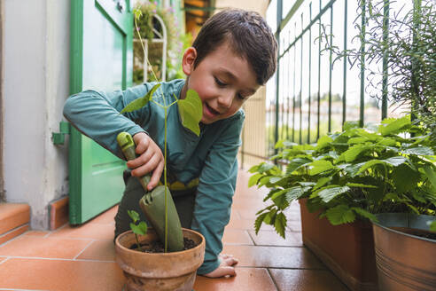 Little boy gardening on balcony - MGIF00534