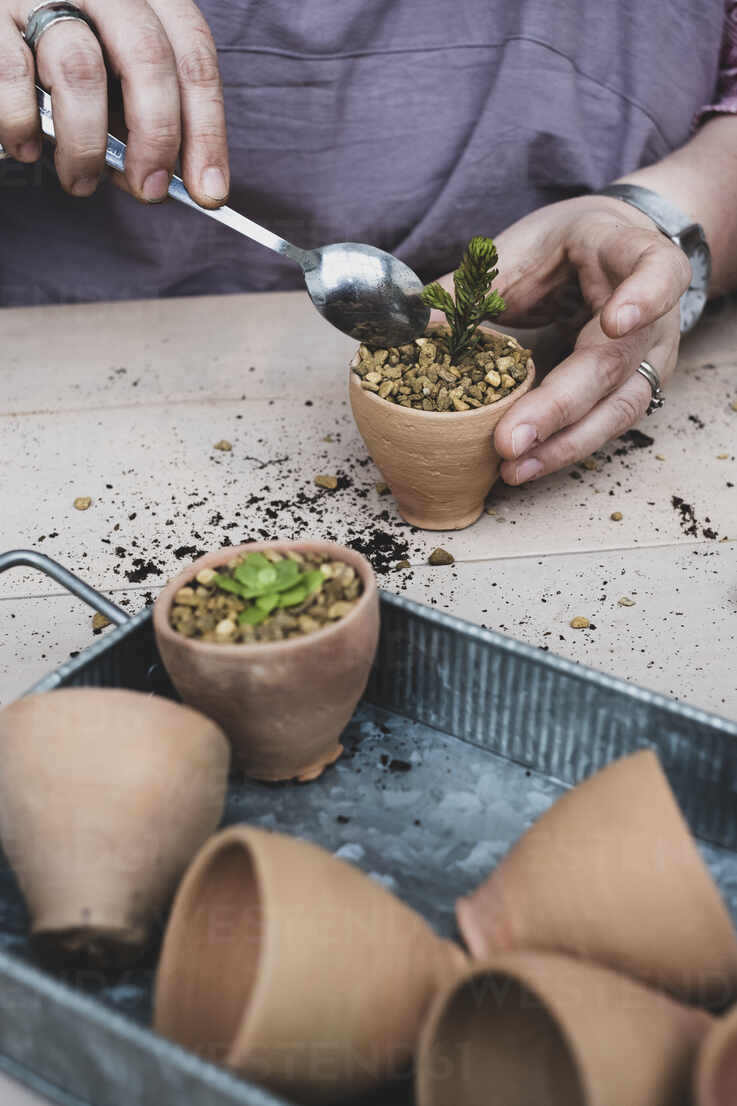 High Angle Close Up Person Planting Succulents In Gravel In Terracotta Pots Minf11545 Mint Images Westend61