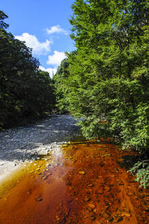 River with brown water from tree leaves running through the Oparara Basin, Karamea, South Island, New Zealand - RUNF02594