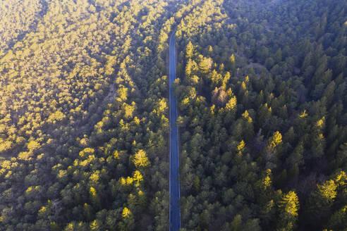 Landstraße durch Kiefernwald und Fichtenwald, Naturschutzgebiet Isarauen, bei Egling, Drohnenaufnahme, Oberbayern, Bayern, Deutschland - SIEF08671