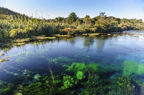 Te Waikoropupu springs declared as clearest fresh water springs in the world, Takaka, Golden bay,South Island, New Zealand - RUNF02676
